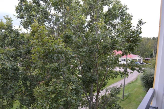 Naturen är ännu väldigt grön fastän vi skriver femtonde september.