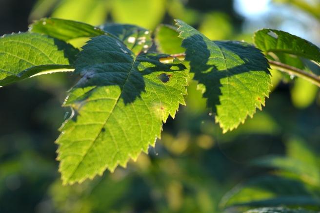 Vadå höst? Här är det sol och grönska på gång!