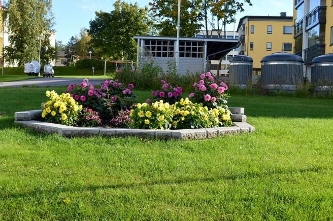 Blomster på gården där jag bor.