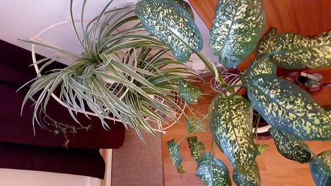 Flyttade på några växter för att frigöra ytor att jobba på.