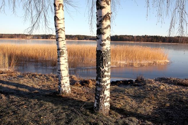 Lovisavik