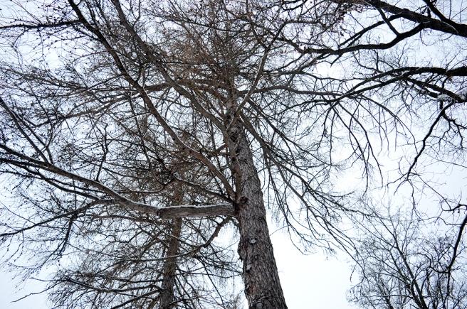 Träd i Kapellparken :-)