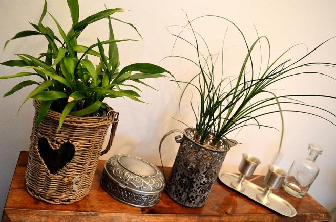 Vill snart köpa fler grönväxter.