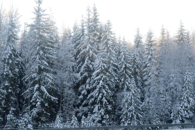 Skog, skog, skog och snö.