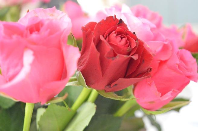 Första veckoslutet i juli firas rosornas helg i Lovisa.