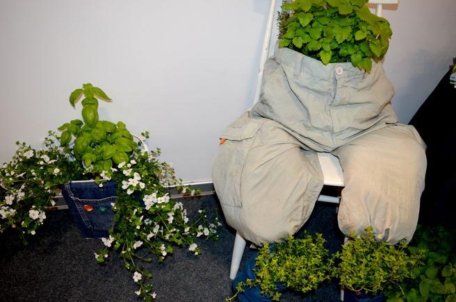 Har du ett par gamla byxor överstående? Då kan du plantera växter i dem.