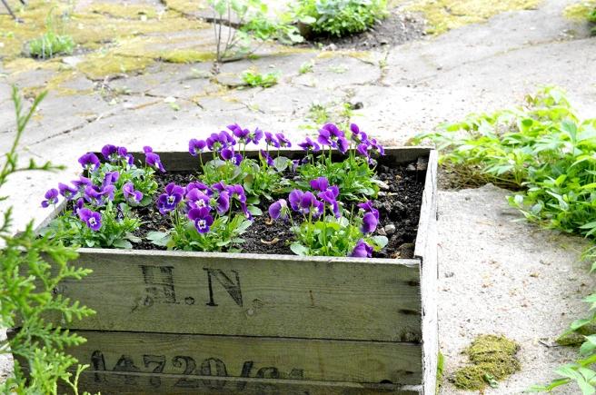 Fina planteringar blir ju alltid glad av :-)
