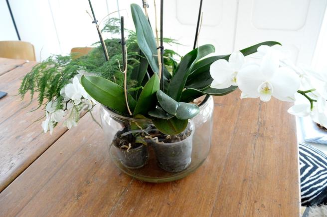 Stoppa ner två eller tre krukor med olika växter i en stor glasburk.