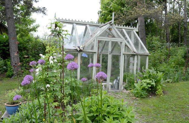 Ett växthus på Kungsdammens gård.