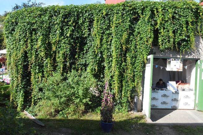 Härlig grönska täcker uthusets vägg. Tidigt förmiddag nådde solen ännu lite in i chokladaffären men en mitt på dagen och på eftermiddagen var där svalt och fint.