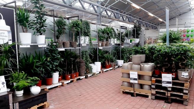 Jag har redan så många växter hemma att jag tror jag väntar till våren innan jag eventuellt köper något nytt.