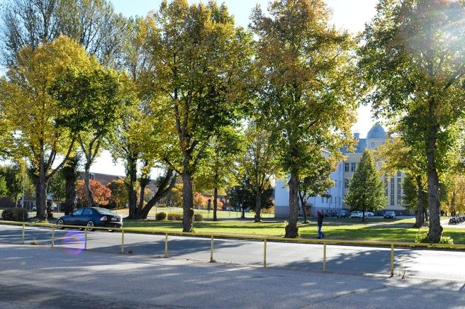 Parken och fortfarande gymnasiet i bakgrunden och längst till vänster idrottshallen.
