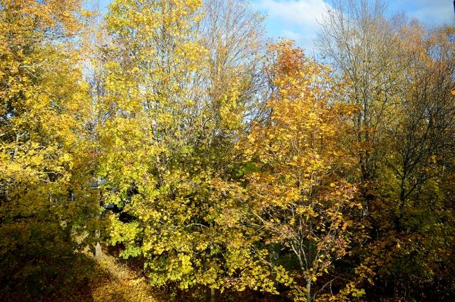 Onekligen vackra färger i naturen just nu.