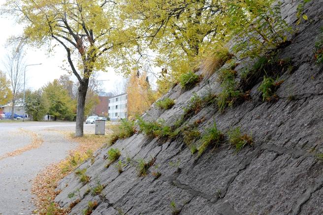 En av höstens arkivbilder. Gräs trotsar sten, under infartsbron i Lovisa.