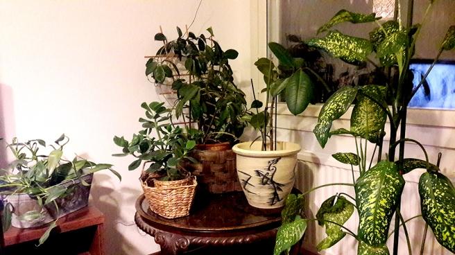 Många växter kräver omsorg, tid och tålamod.