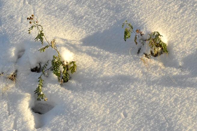 vinter_1