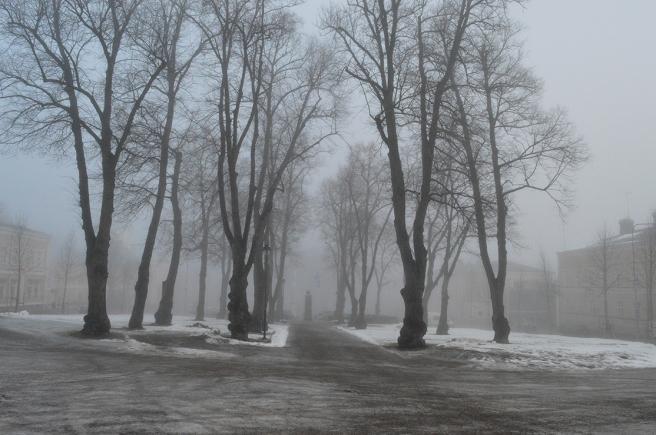Kyrkoparken höljd i dimma. De svarta trädstammarna avtecknar sig fint.