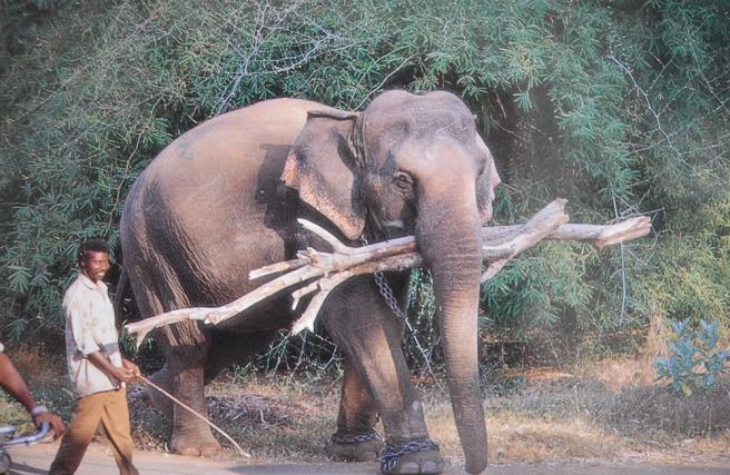 Elephant on work står det bak på det här kortet som jag fick av en ung studerande kille.